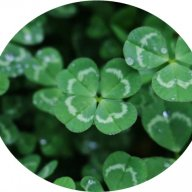Ace_Of_Clover